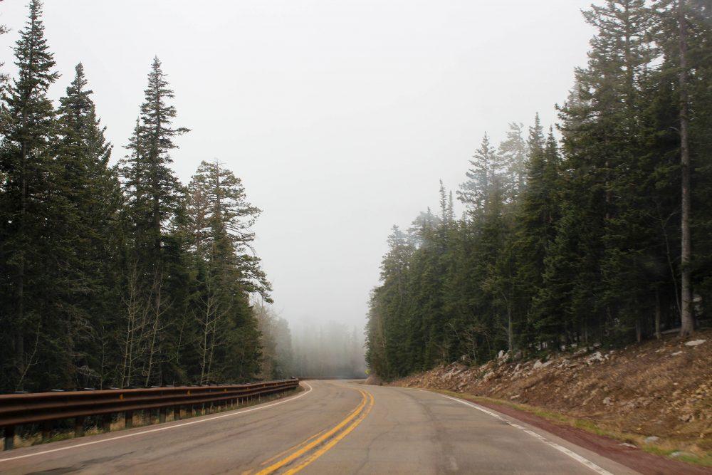 Road and pine trees at Sandia Crest Albuquerque New Mexico