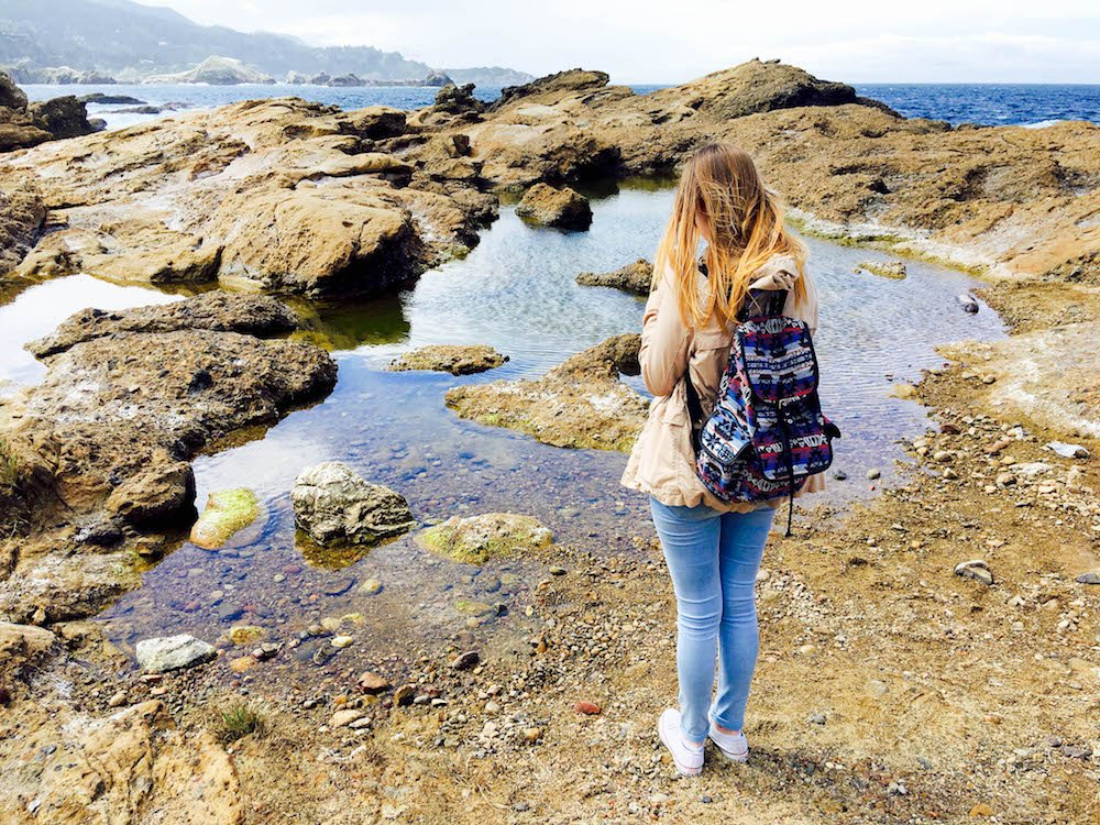 The Highlights of Point Lobos State Natural Reserve in