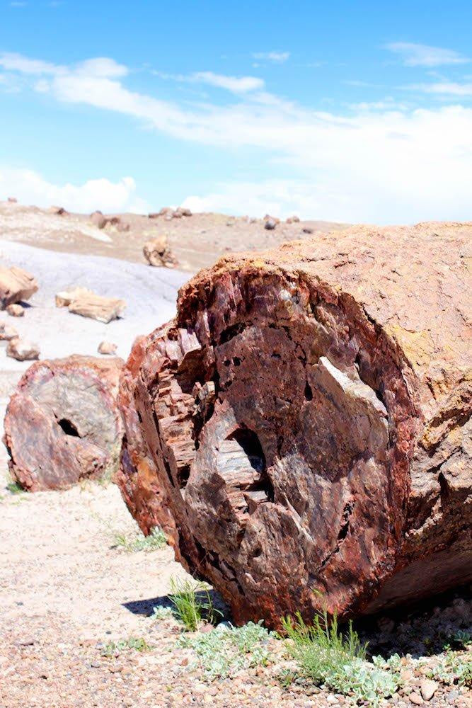 Log Petrified Forest National Park Arizona USA