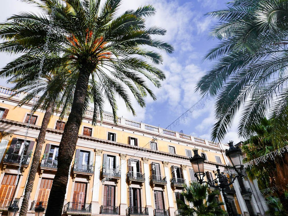 Palm Trees and a yellow building in the Plaça Reial Barcelona Spain