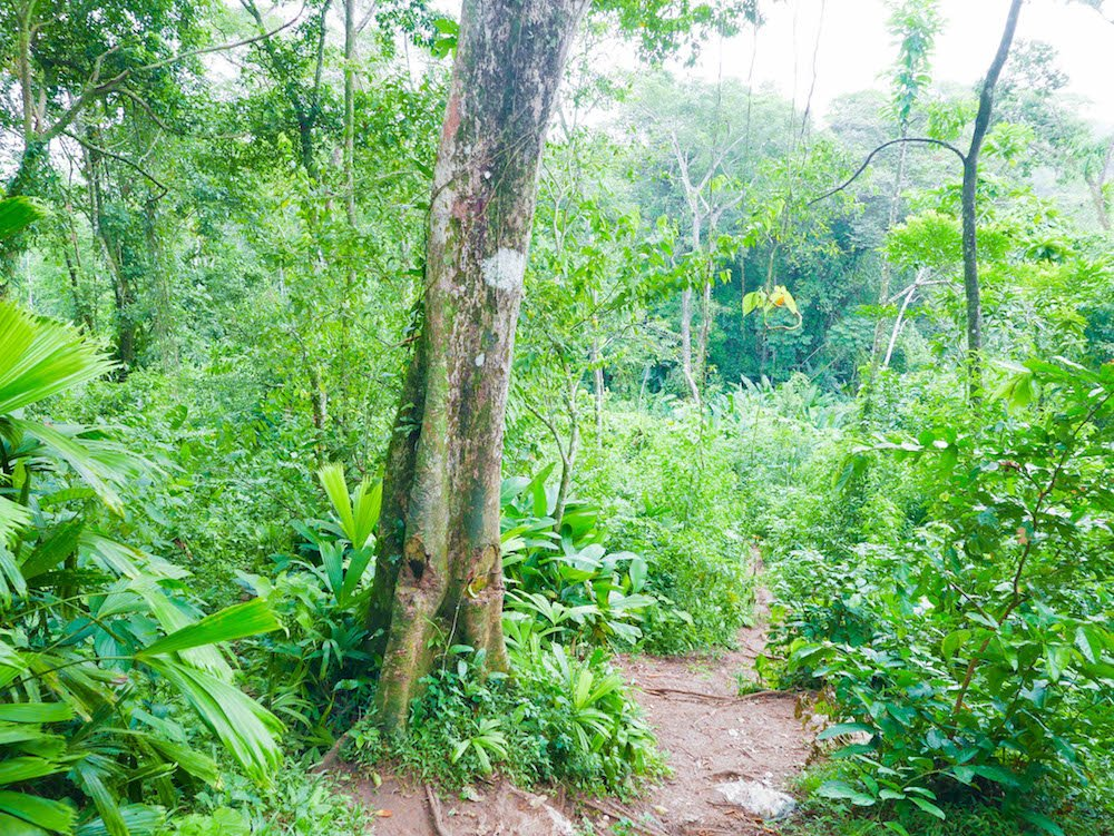 A small path through the forest leading from Old Bank to Wizard Beach on Isla Bastimentos, Panama