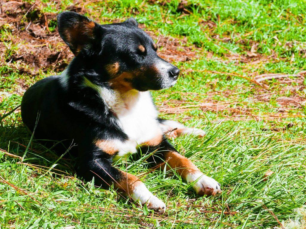 rocky balboa dog lost waterfalls trail hike boquete