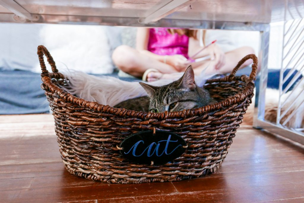 Yara Crumbs and Whiskers Cat Cafe Georgetown