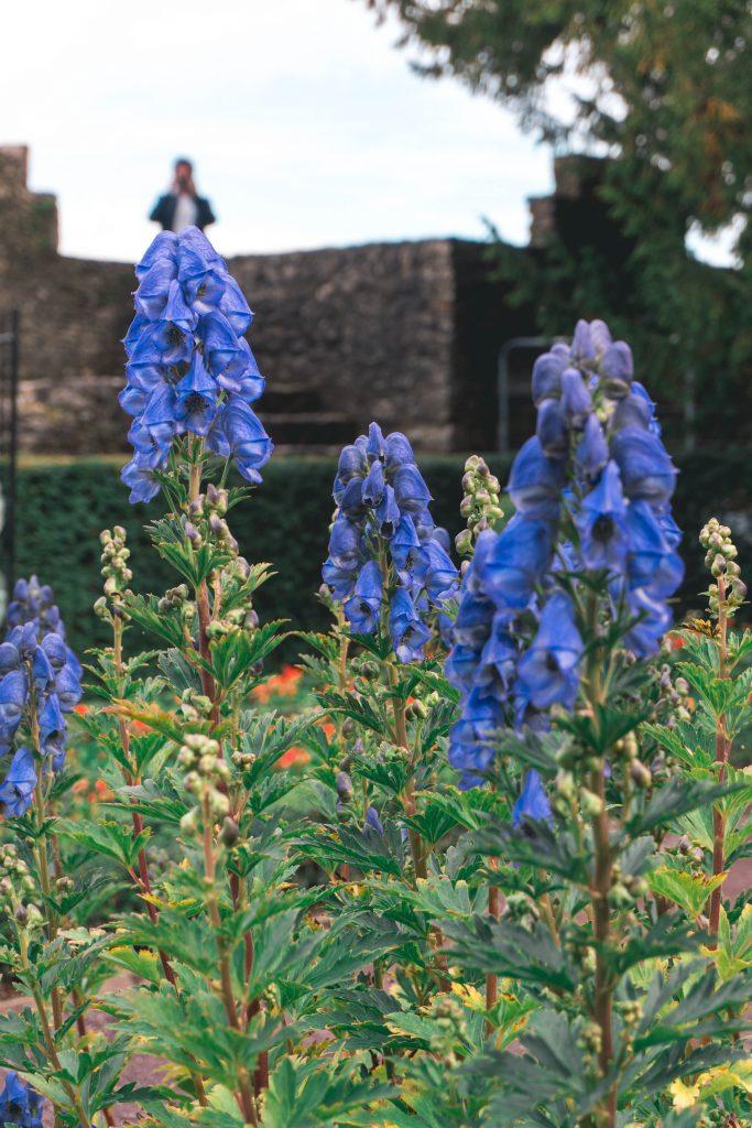 Poision Garden Blarney Castle Ireland