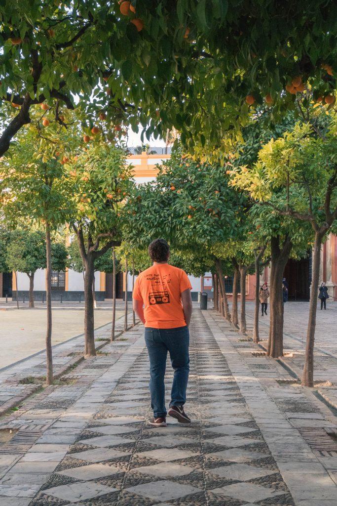 Daniel Orange Trees Seville