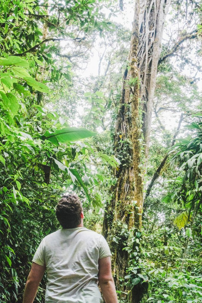 Daniel looking up at a giant tree in the Monteverde Cloud Forest Reserve