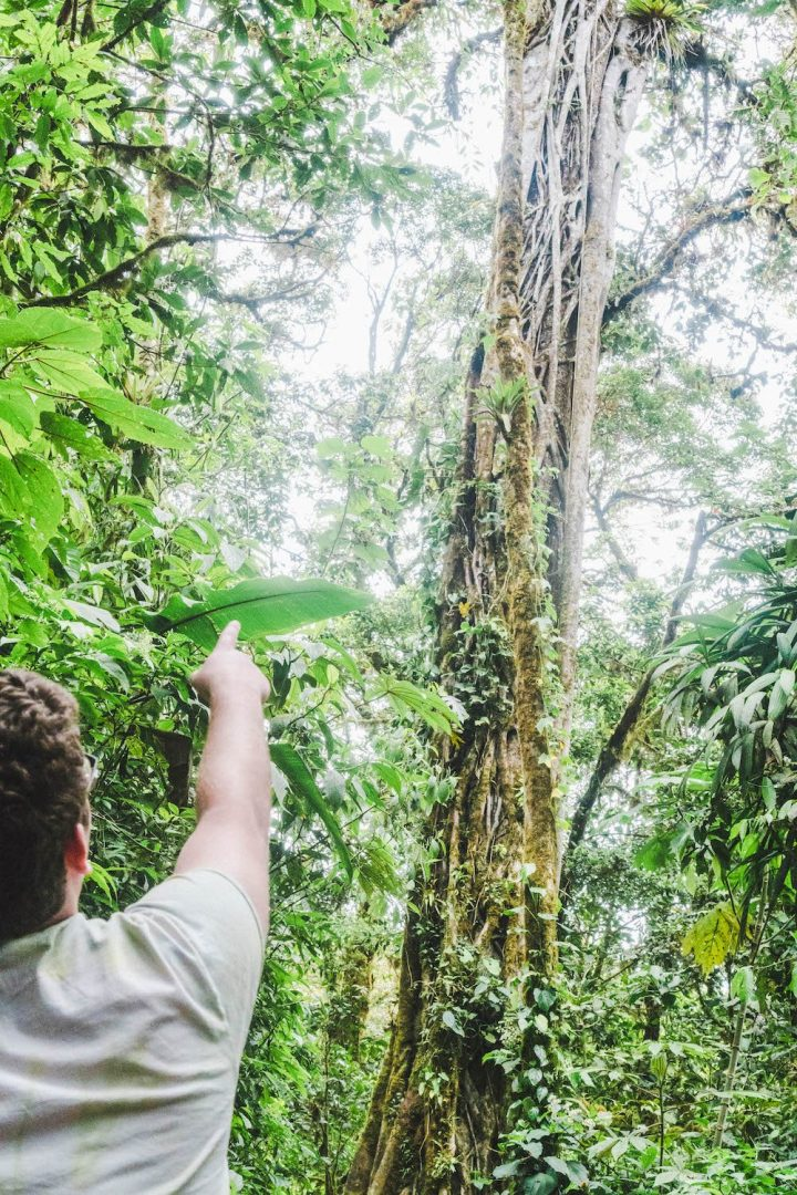 Daniel pointing at a giant tree in the Monteverde Cloud Forest Reserve