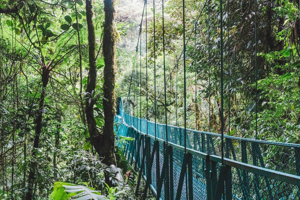 Hanging bridge disappearing into the cloud forest in Monteverde, Costa Rica