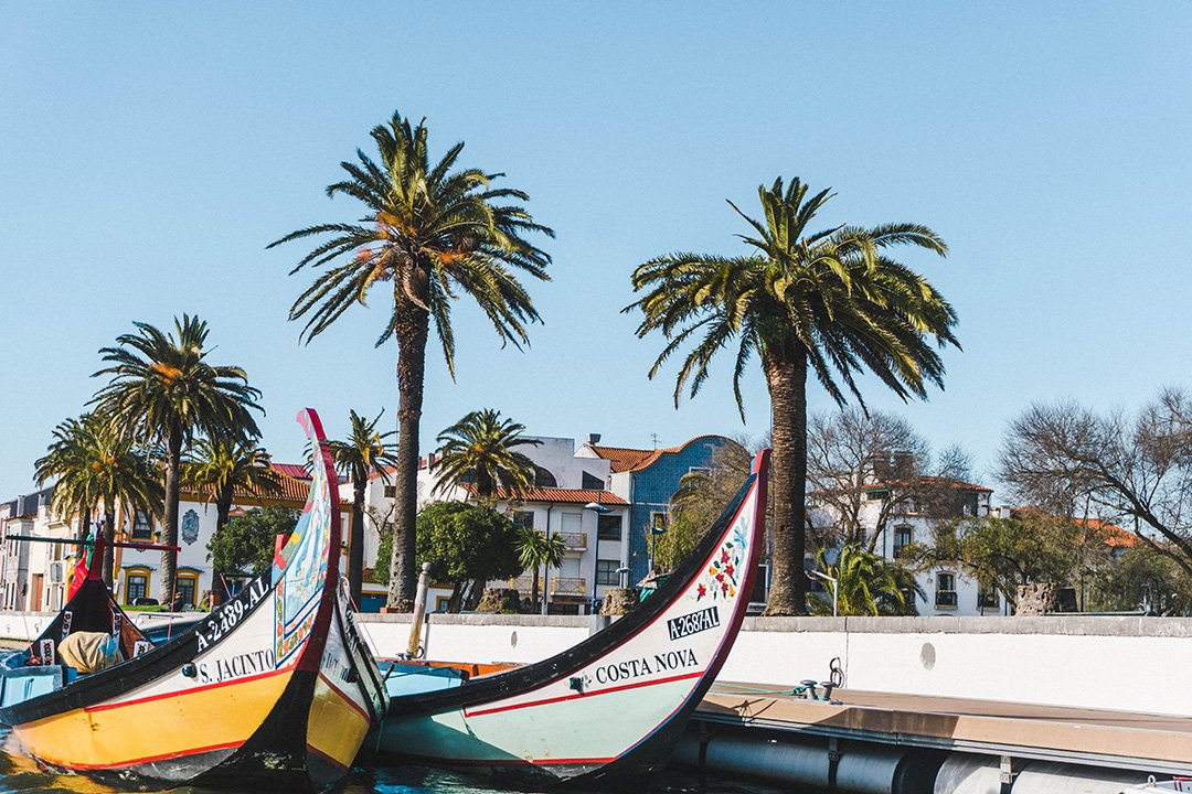 Moliceiro boats and palm trees in Aveiro, Portugal