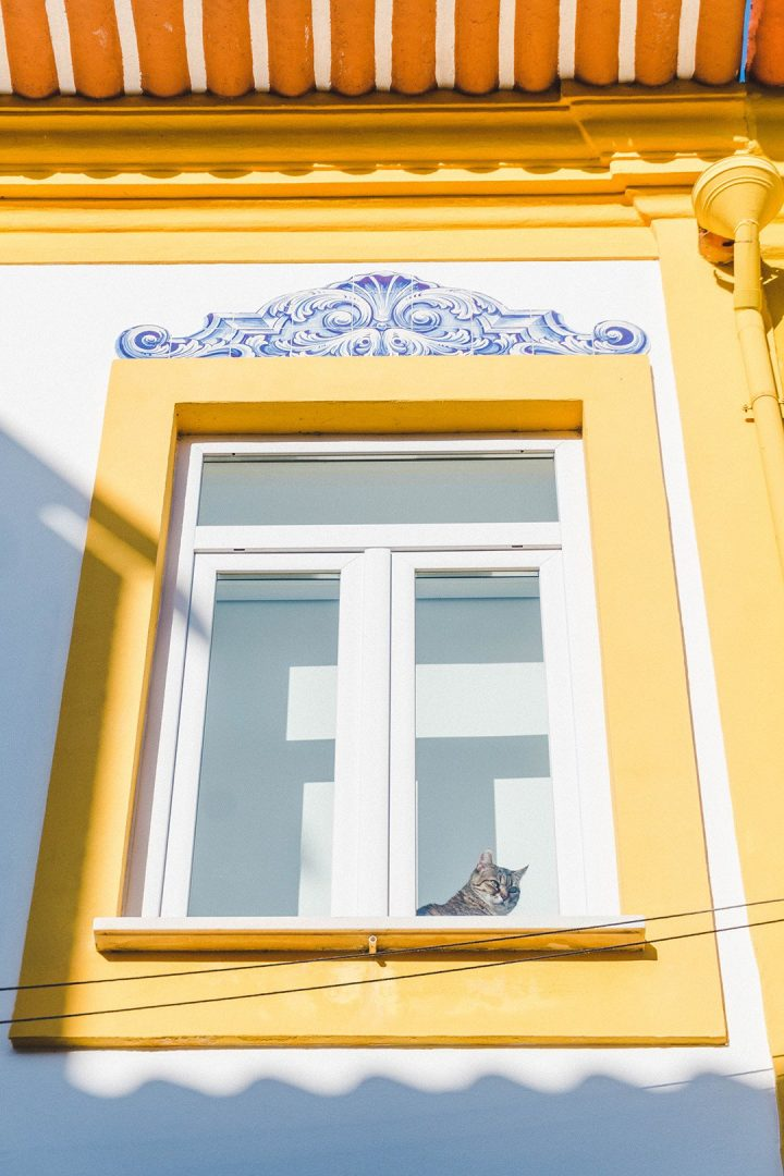 A cat looking out a yellow-bordered window in Aveiro, Portugal