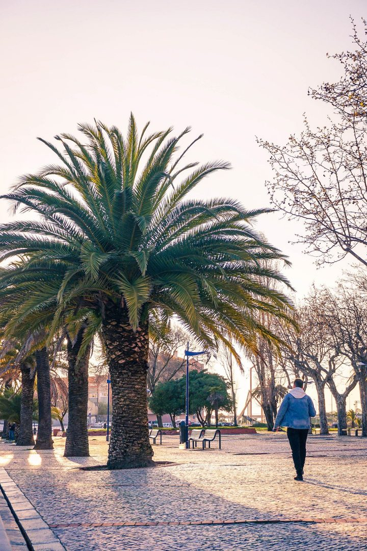 Man walking next to palm trees at sunset in Aveiro, Portugal