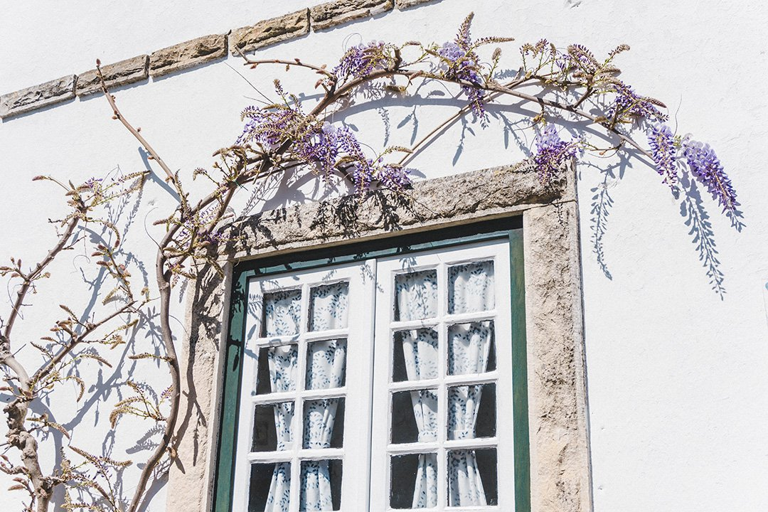 Purple flowers hanging over a window in Obidos, Portugal