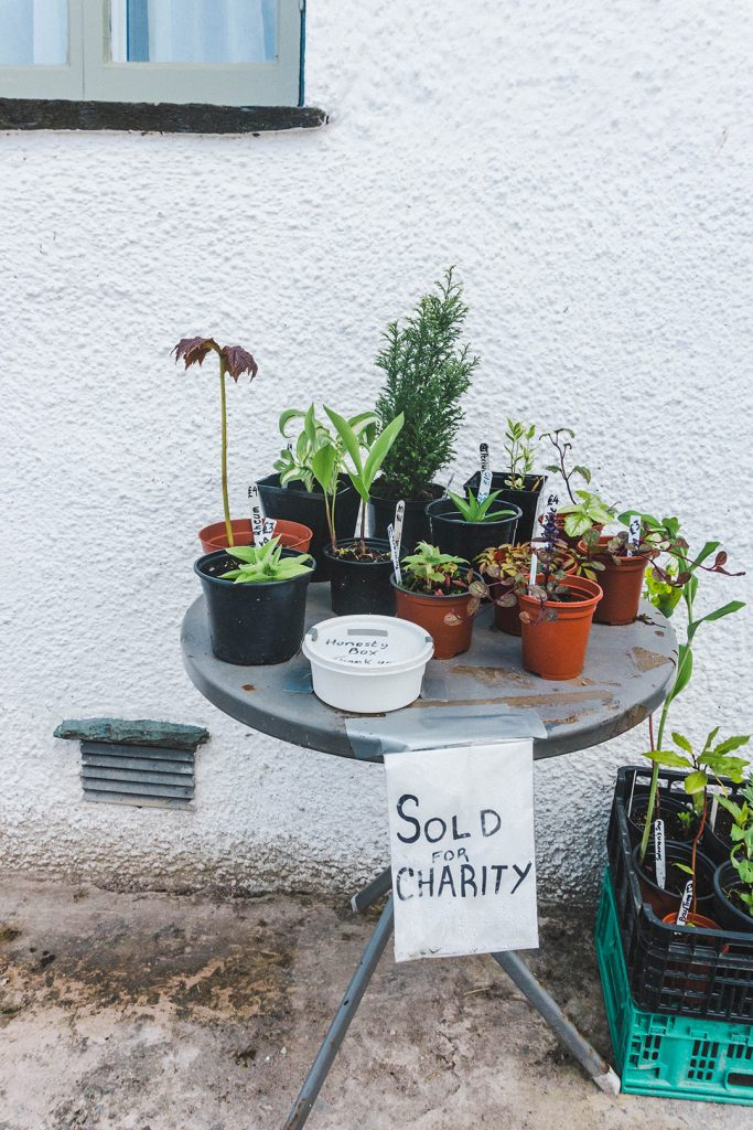 A small table outside a house in Hawkshead with plants sold for charity