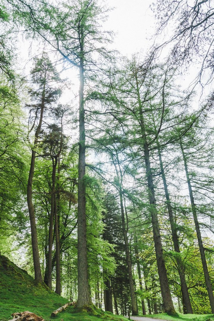 Trees on the walk around Tarn Hows in the Lake District, UK
