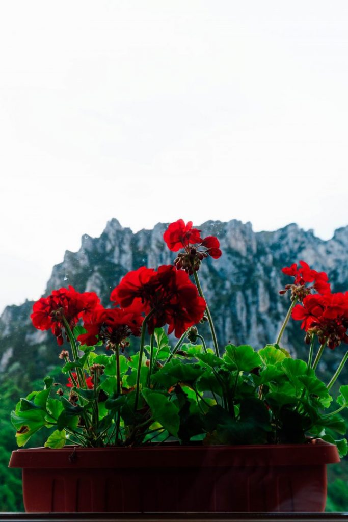 A box of flowers in a window overlooking a rocky mountain in Valle di Ledro, Italy