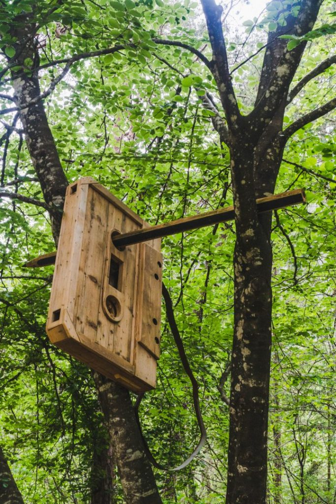 A giant, wooden cassette tape with a pencil poking through to rewind it in the forest