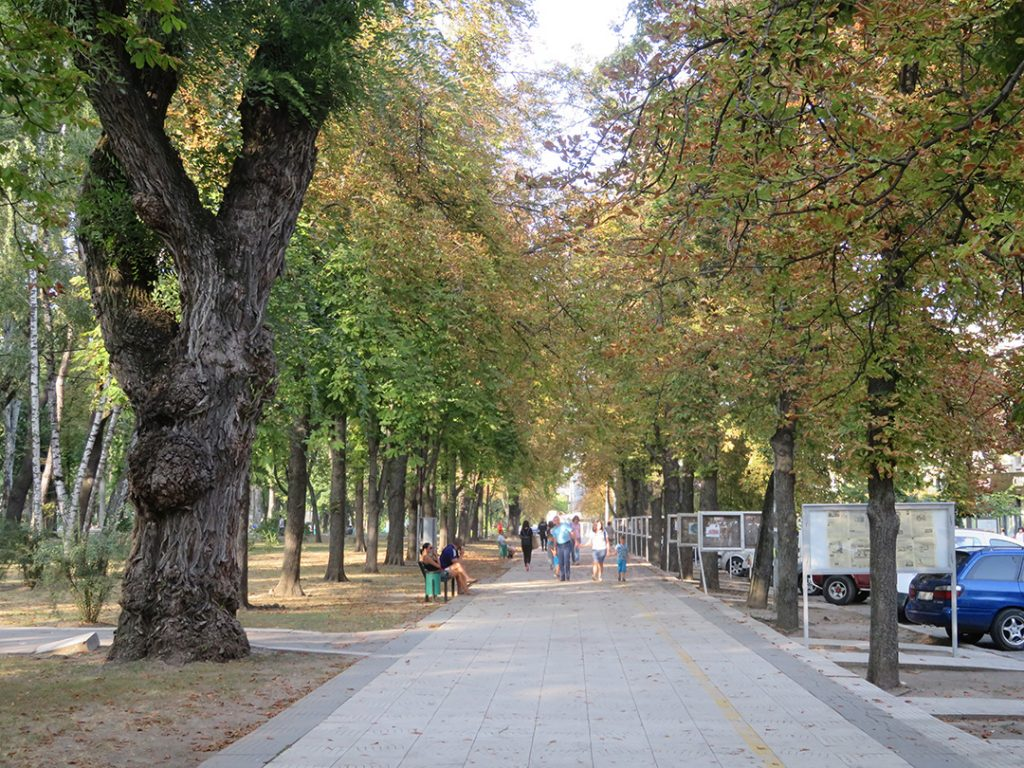 A pathway lined by trees in Chisinau, Moldova
