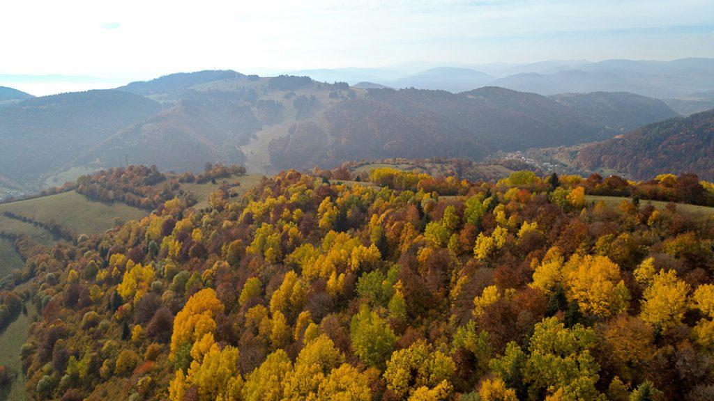 Fall trees in Slovakia