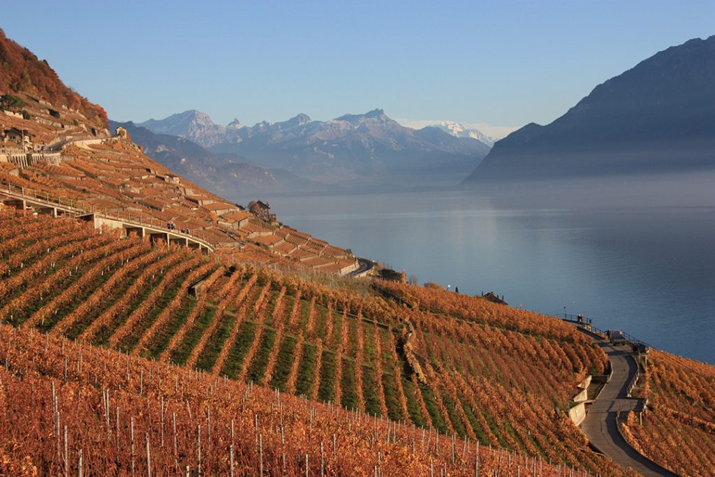 The Lavaux Vineyard Terraces in the fall