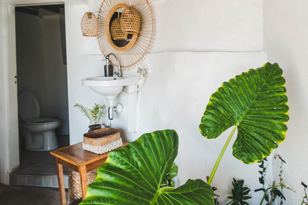 Big, green leaves in front of the bathroom at this Bali surf camp