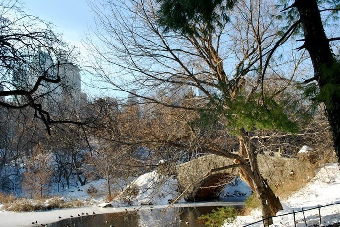 a bridge in central park in winter