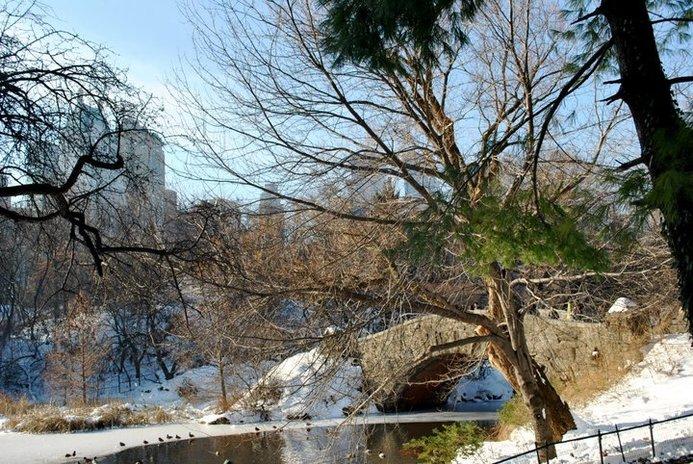 a bridge in central park in winter