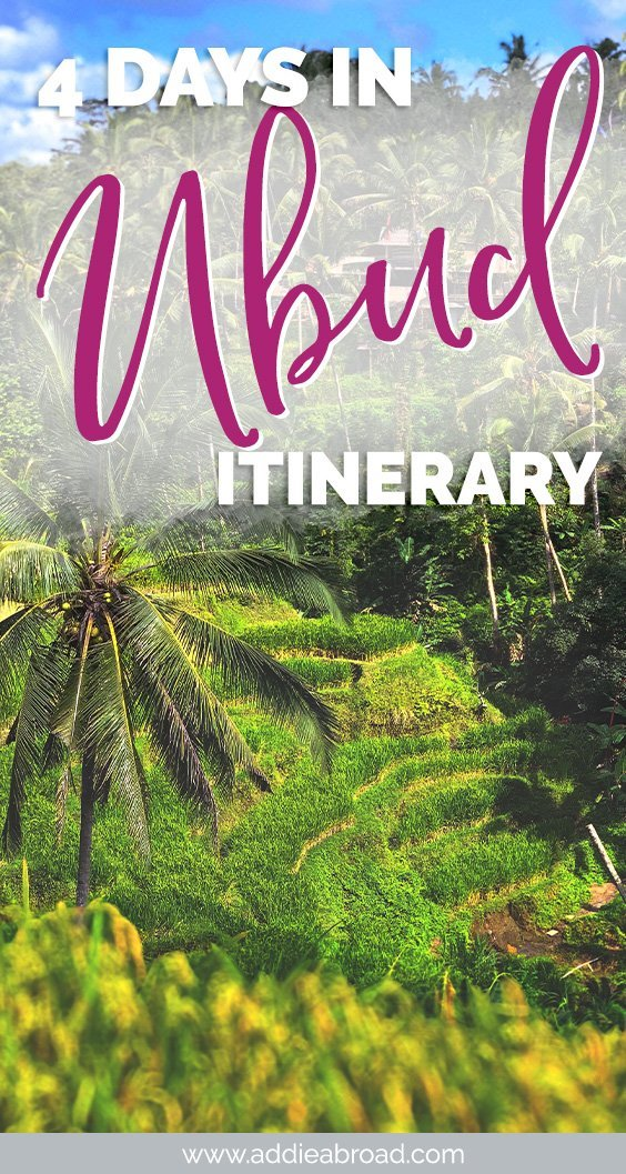 Looking for things to do in Ubud, Bali? This 4 day Ubud itinerary has all of the must-dos and off-the-beaten-path sights in Ubud, including the Monkey Forest, rice terraces, and a cooking class! Eat the best food and learn about the best accommodation/where to stay in Ubud as well! #ubud #bali #travel
