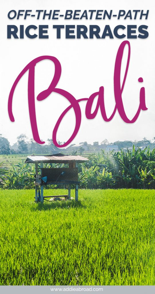 Forget about Tegalalang Rice Terraces. They might be a famous Bali Instagram spot, but they're overcrowded. Discover off-the-beaten-path rice terraces in Bali on this Urban Adventures tour! Click through to read all about it. #travel #bali