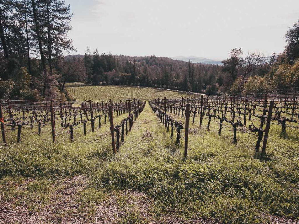 harvested vineyards in Napa Valley, California in winter