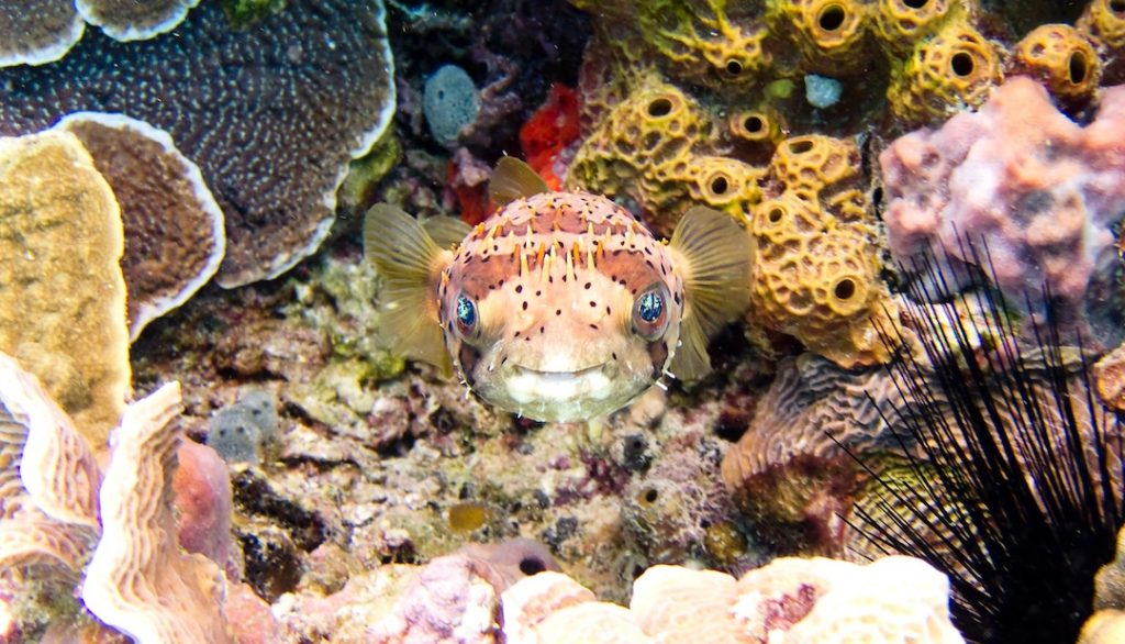a fish in the reef in Cozumel, Mexico