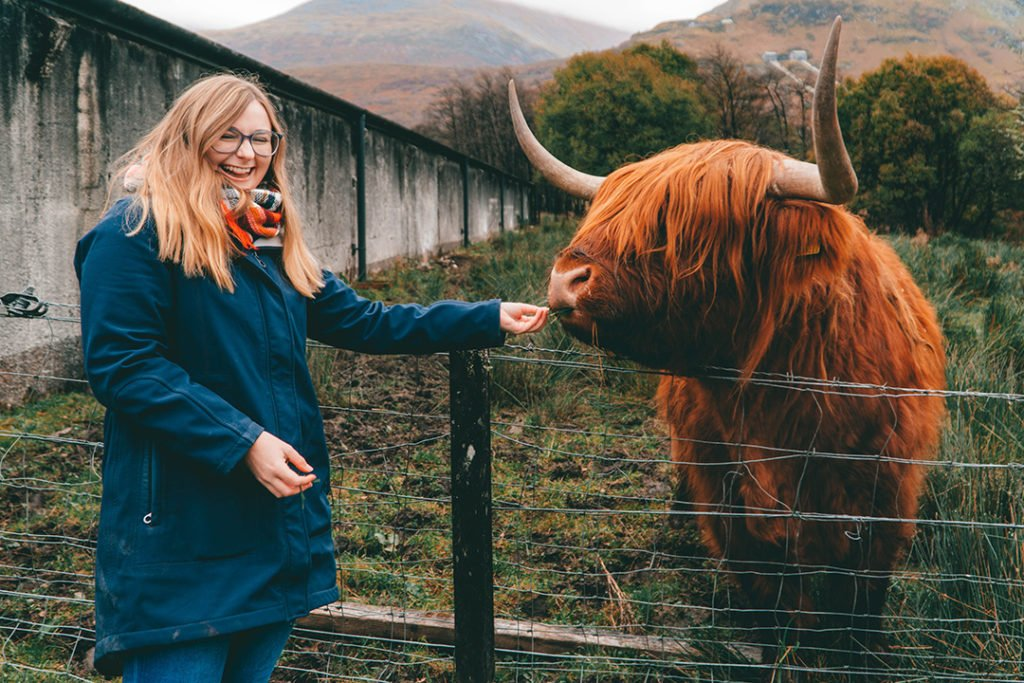 addie smiling and feeding a highland cow - a must-do on an isle of skye tour from edinburgh!
