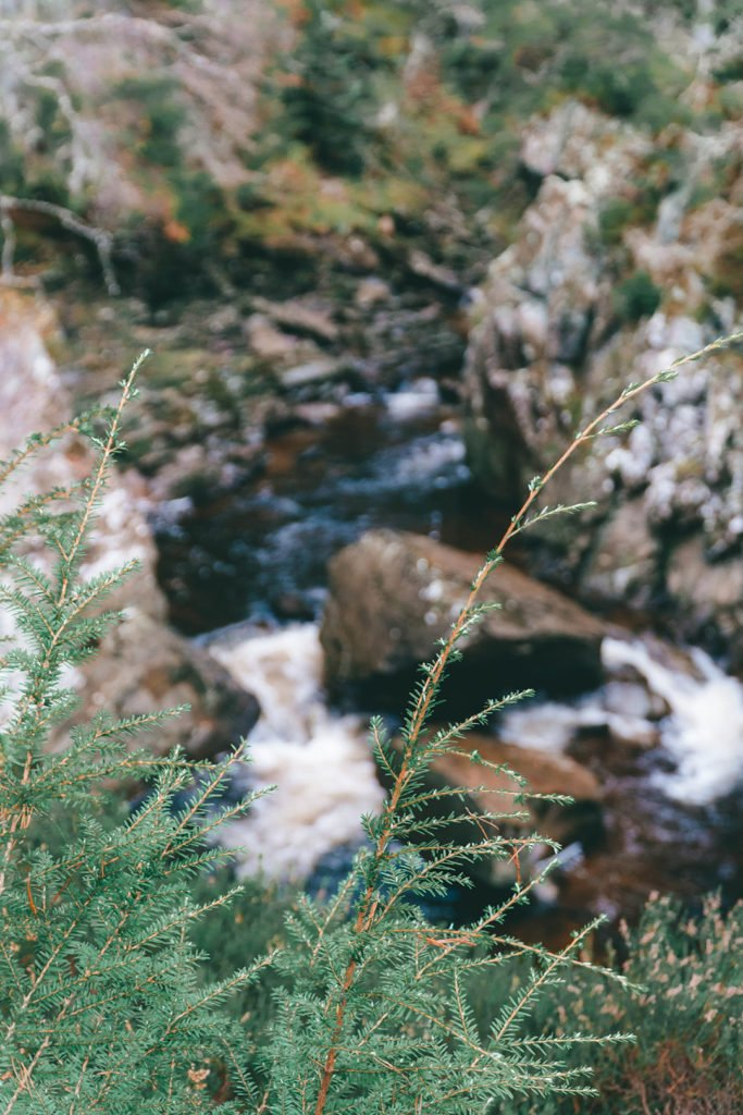 close up of a bush in front of a waterfall