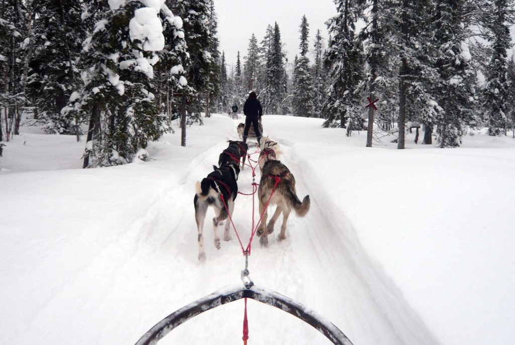 sled dogs pulling a sled through a snowy forest in Finnish Lapland