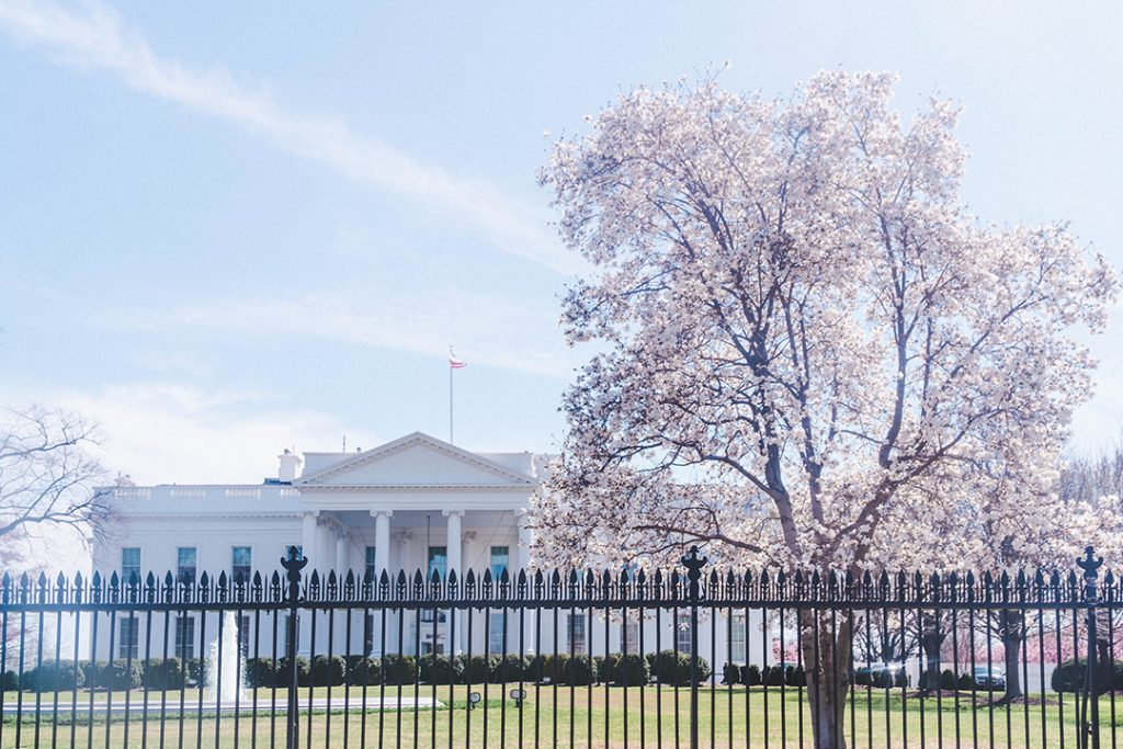 The back of the White House with a cherry blossom tree in front of it.