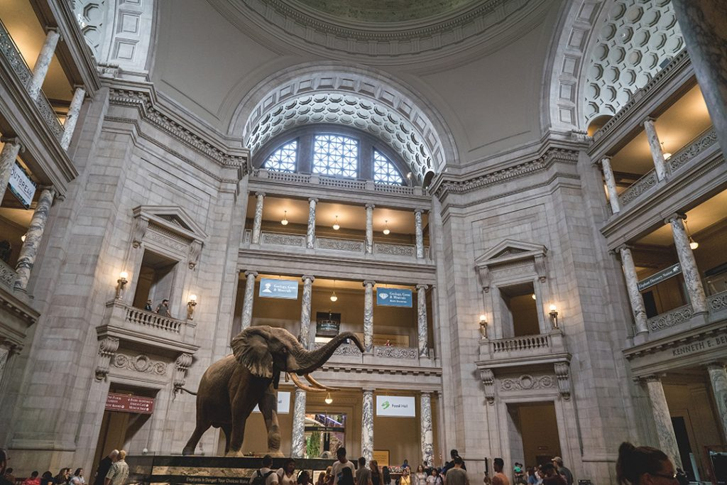 A giant elephant in the main entrance way of the Natural History Museum in Washington DC.