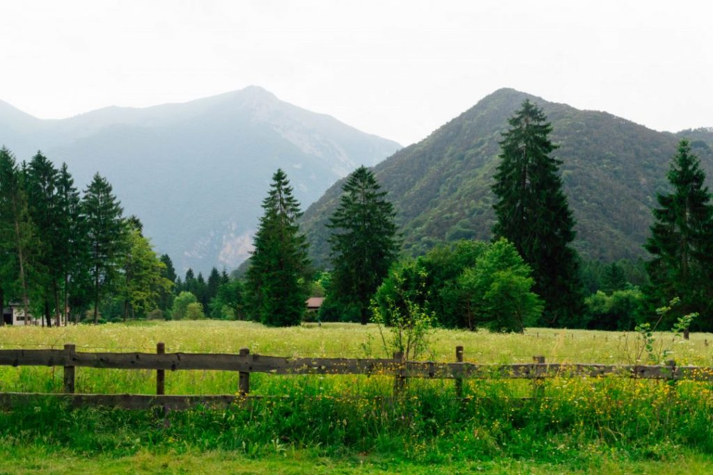 Lush mountains in the background of a green field and pine trees in Valle di Ledro, Italy
