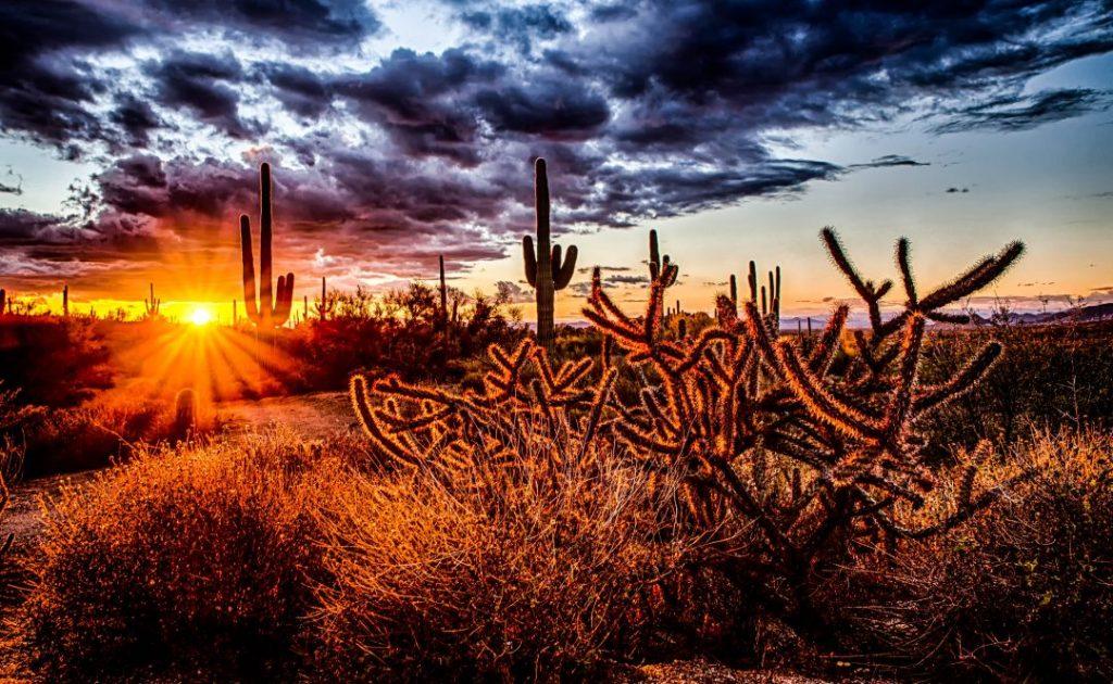 sun peeping through a cactus in the desert of Scottsdale, Arizona