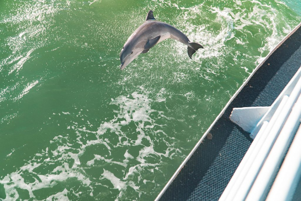 a dolphin jumping through boat wake