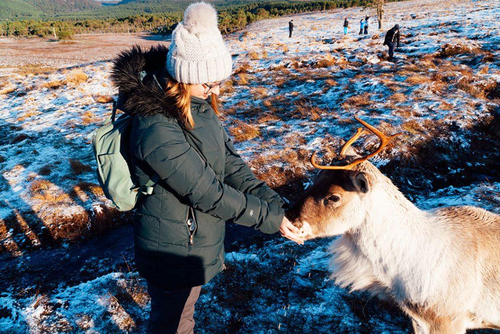 addie feeding a reindeer