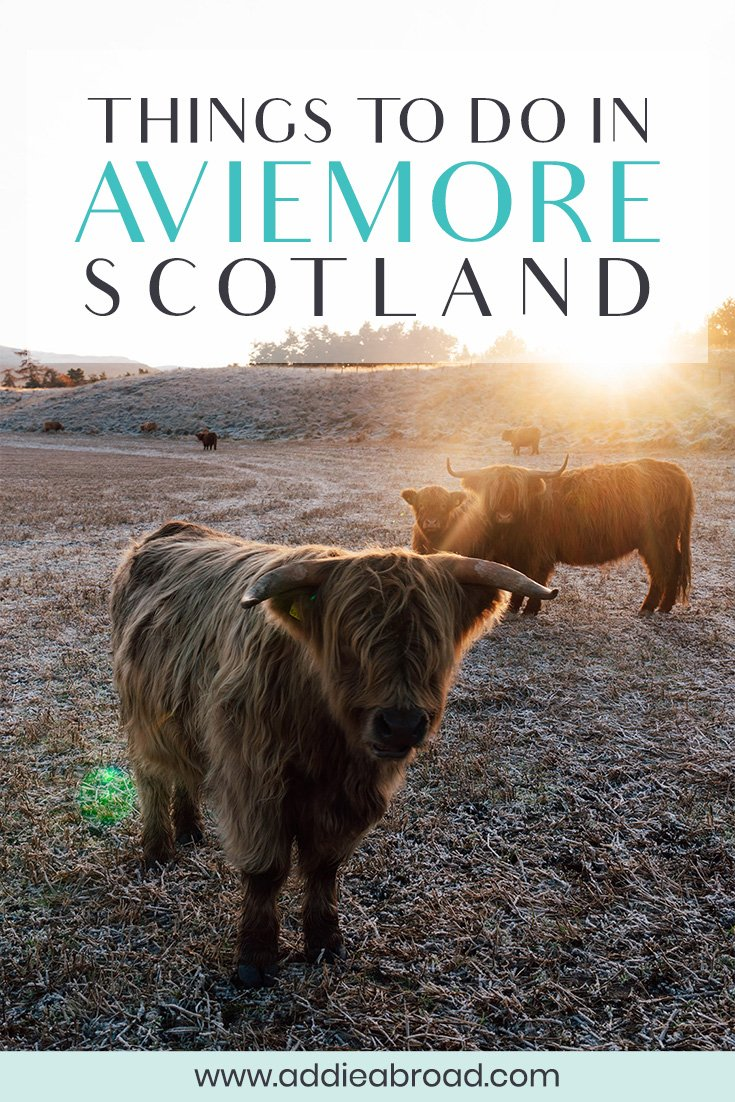 Aviemore, Scotland is absolutely FULL of things to do - from hiking to visiting the Cairngorm Reindeer Herd or going on a highland cow safari! This post lists the top 5 things to do in Aviemore in any weather - including snow!