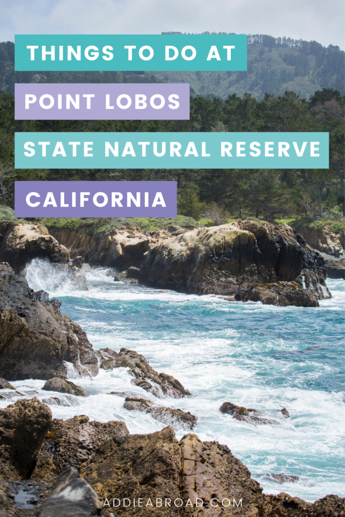 Planning a trip to Point Lobos, California? Here are some of the best things to do in Point Lobos, including tide pools, hiking, and scuba diving! Click through to learn more.