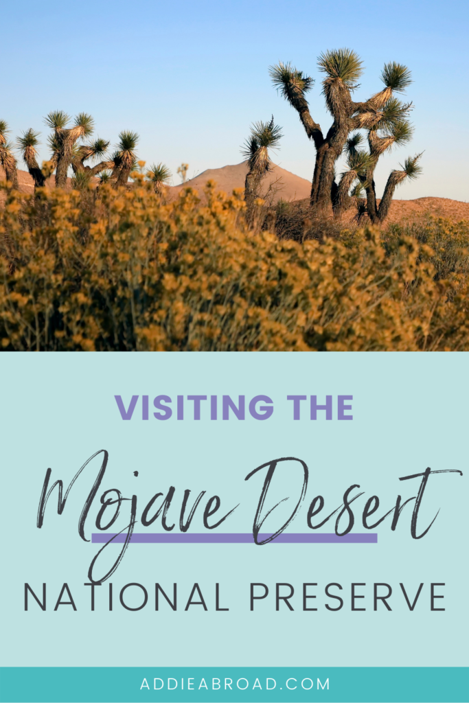Wanting to visit the Mojave National Preserve? This blog post details everything you need to know about visiting the Mojave Desert, California. Click through to read!